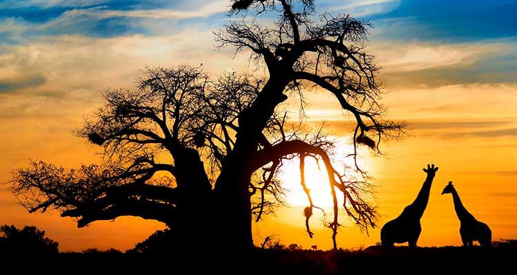 seguro viagem para a África