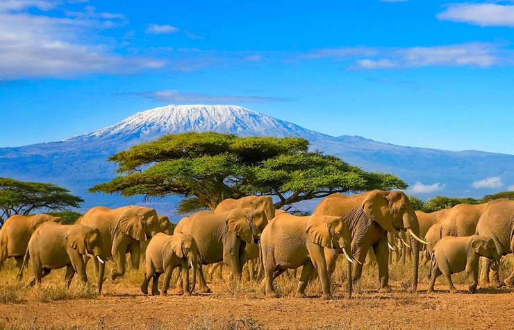 Seguro viagem África por que contratar