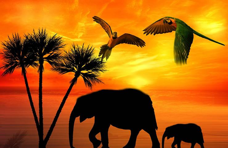 Seguro viagem África como funciona