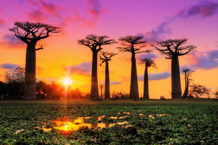 Seguro viagem África