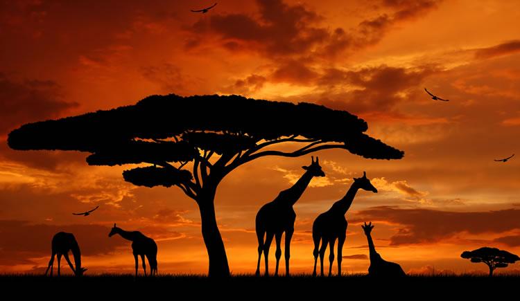 Viagem a África