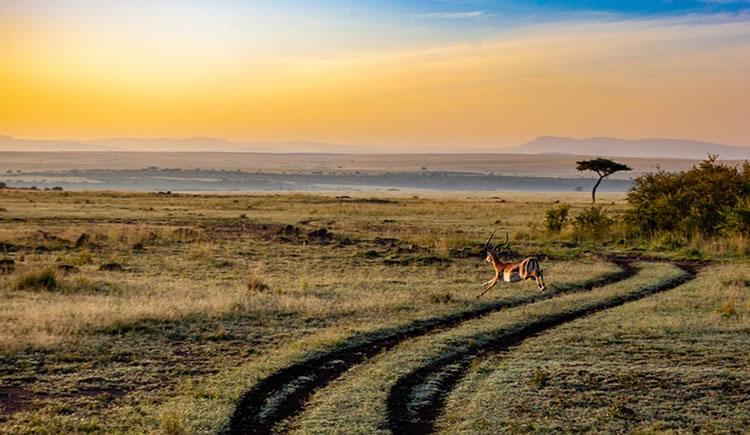 viagem a africa