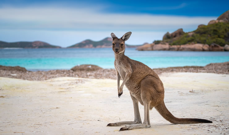 Cotação seguro viagem para a Oceania