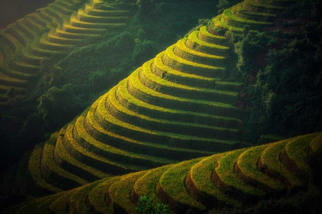 Campos de arroz em Bali, Indonesia