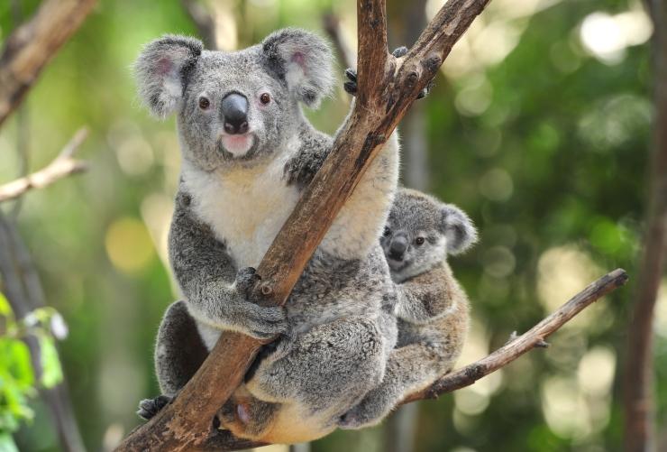 É necessário seguro viagem para Austrália?