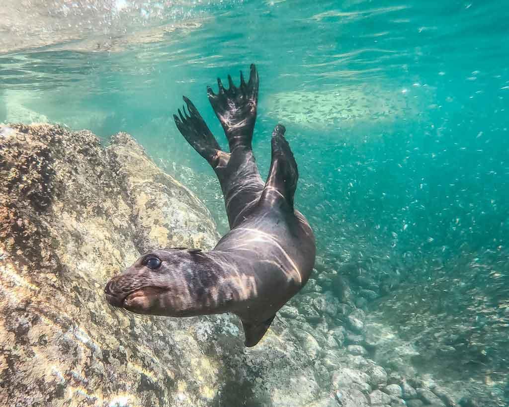 Mergulho com foca