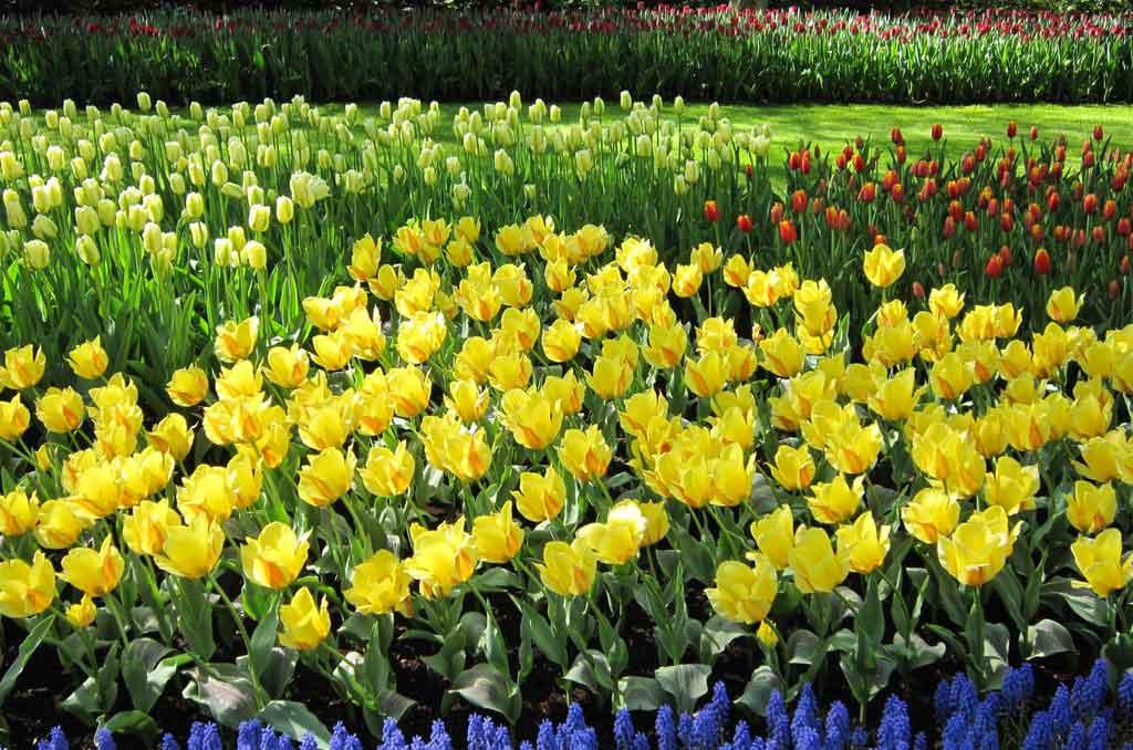 Quando é a primavera na Holanda