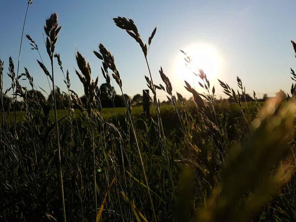 Tempratura média na primavera na Holanda