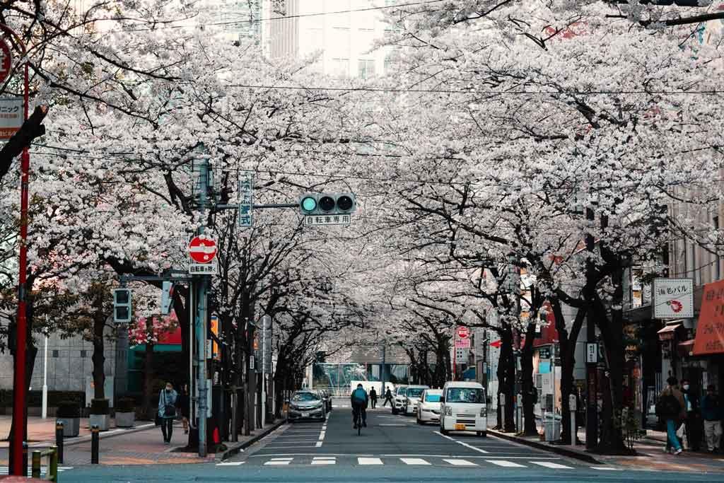 Tóquio: curiosidades