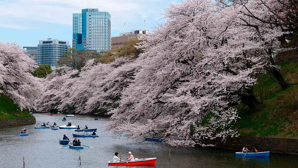 Tóquio: melhor época para viajar