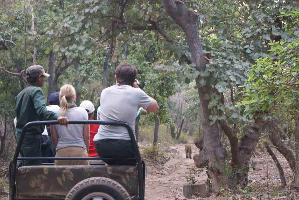 Roupas para Safari Escolher safaris que respeitam os animais