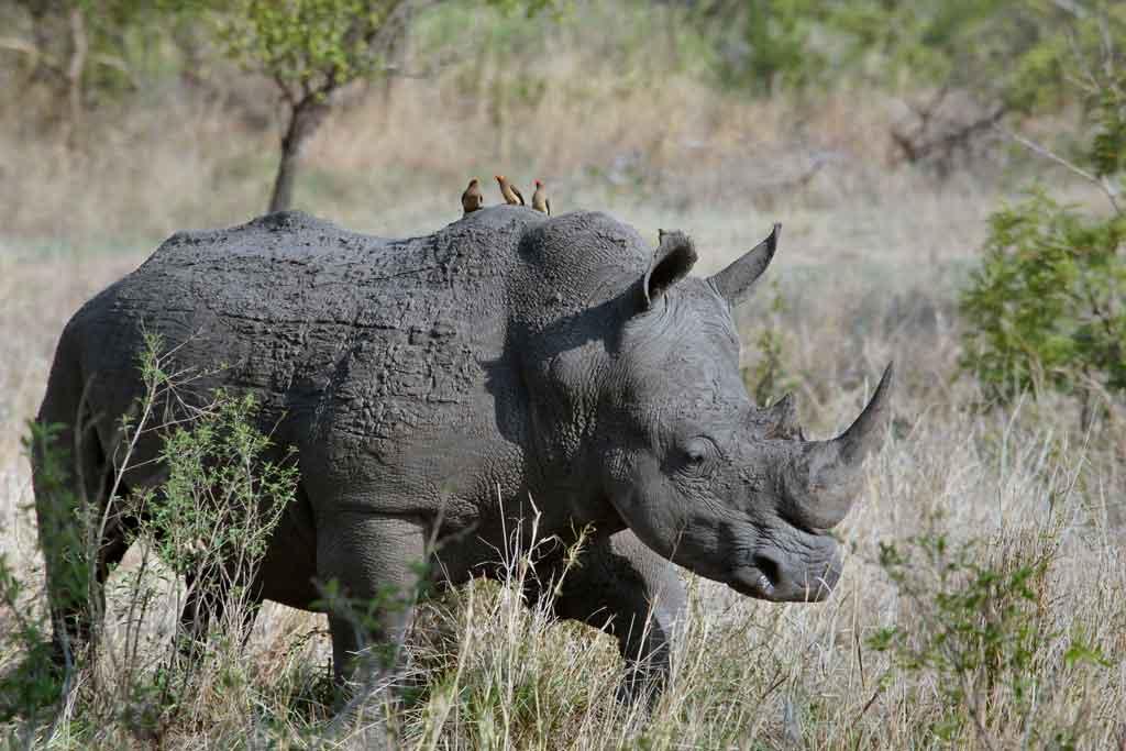 Roupas para Safari Kruger Park