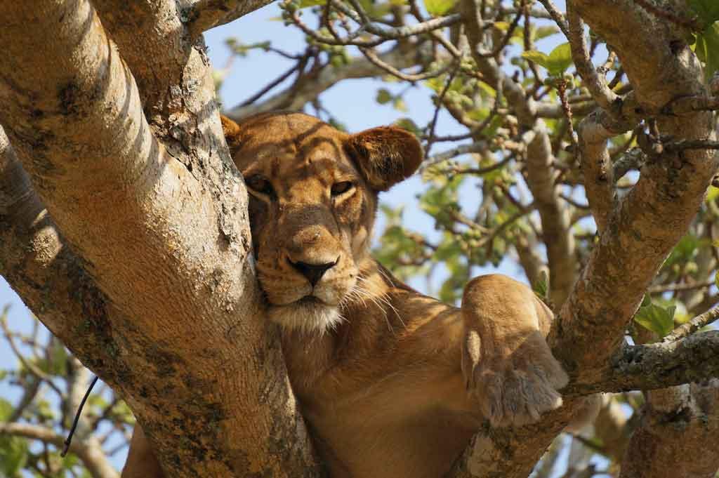 Roupas para Safari o que saber antes