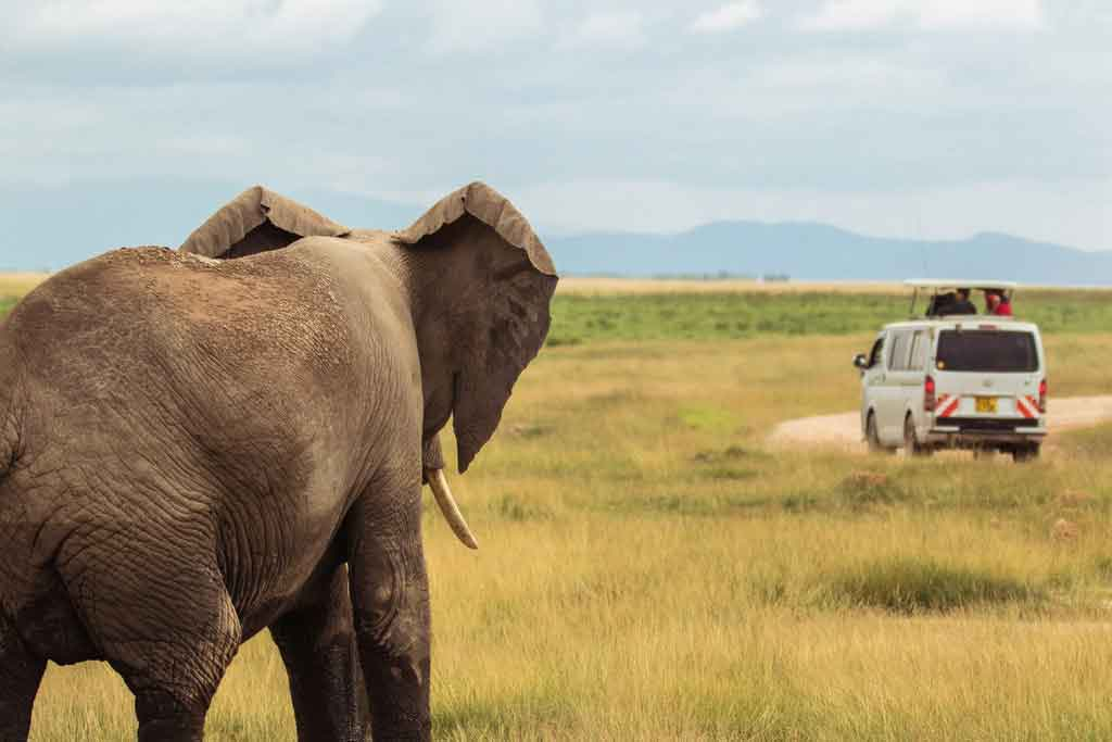 Roupas para safari