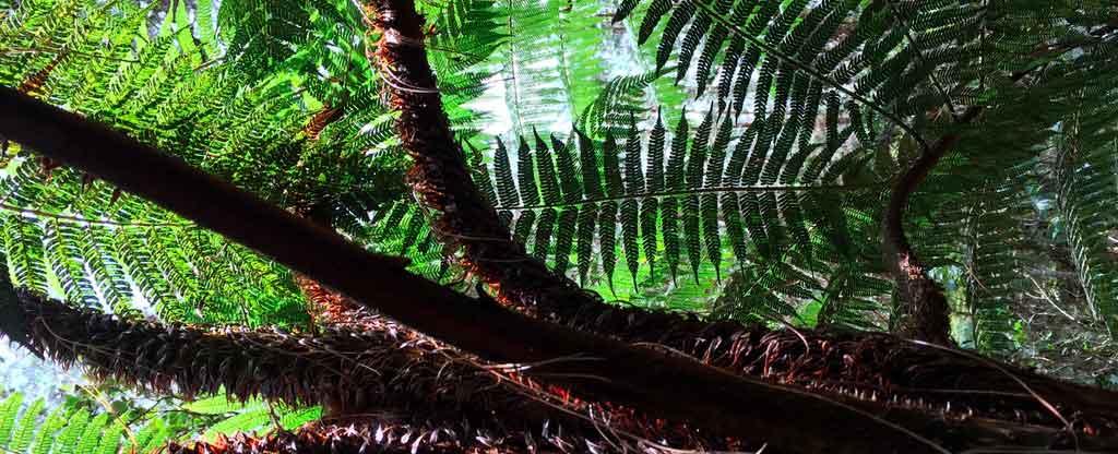 Roteiro Colômbia parque Arvi