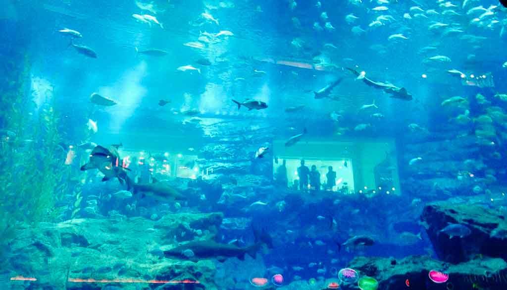 Tudo sobre Dubai Aquário de Dubai