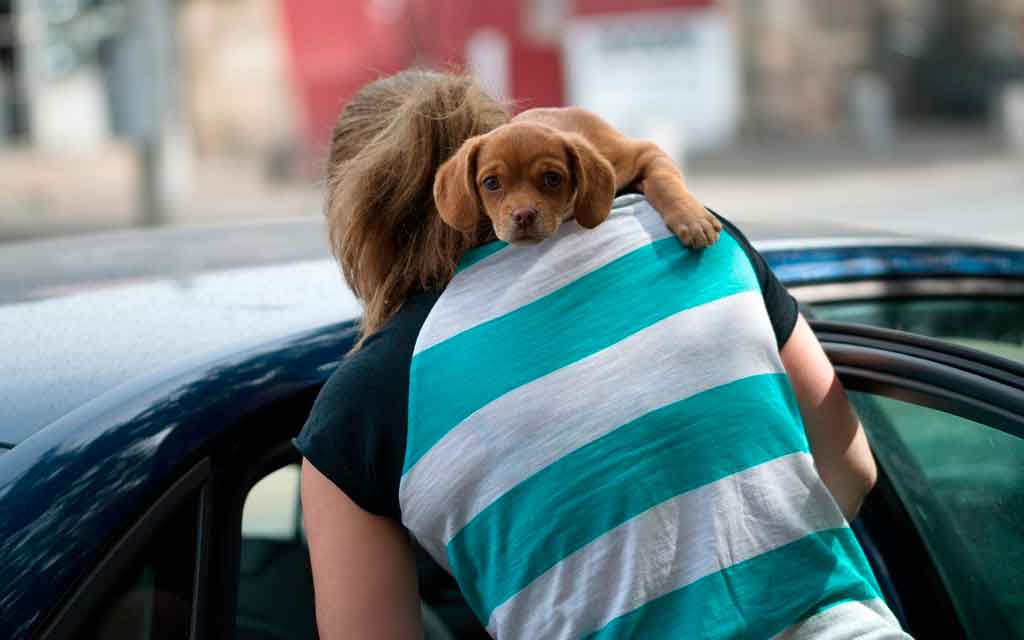 Viajar de carro com cachorro