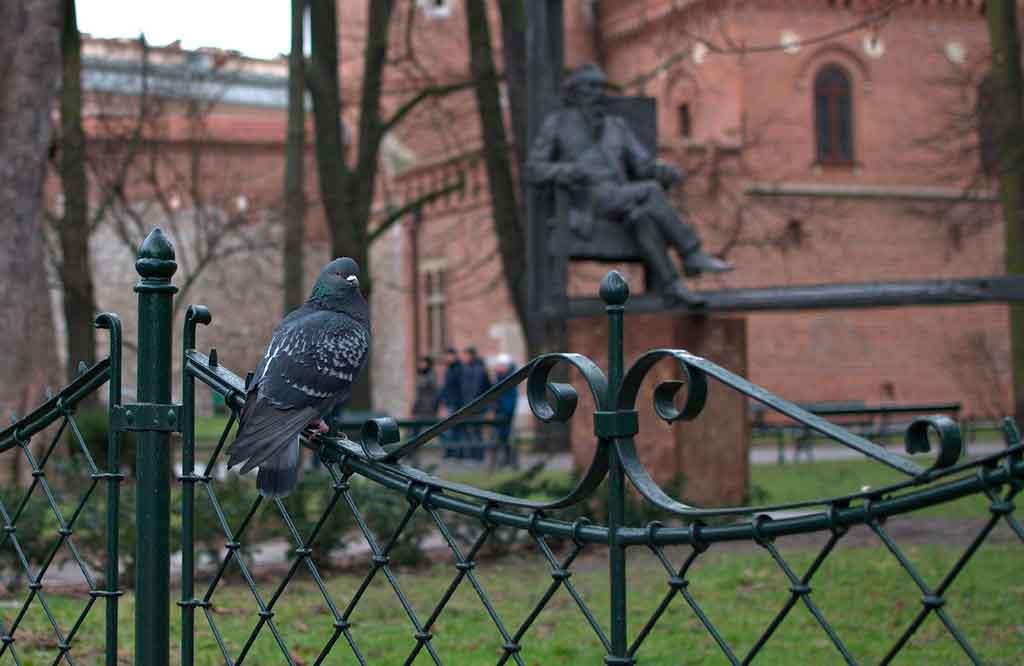 Cracóvia Polônia planty park