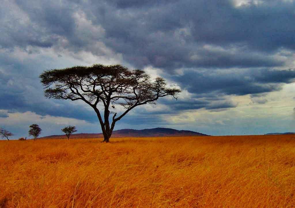 Tanzânia curiosidades