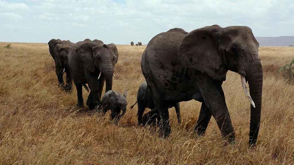 Tanzânia serengeti