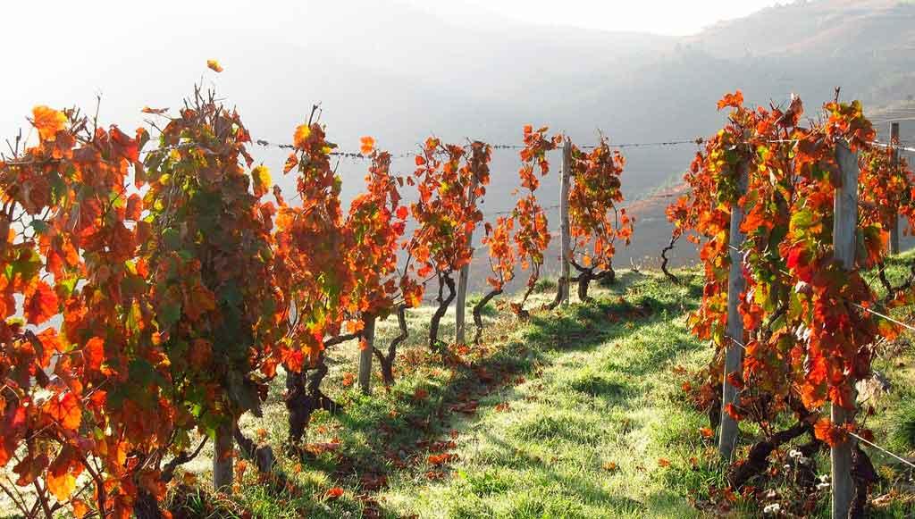 Évora Portugal vinicolas