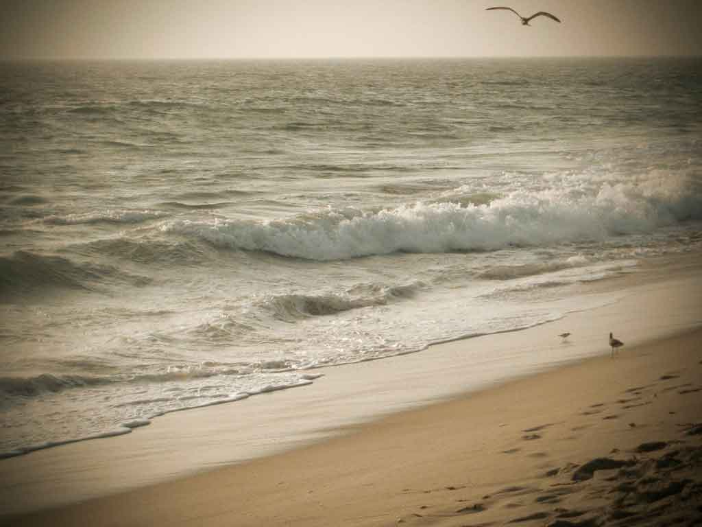 Malibu California zuma beach