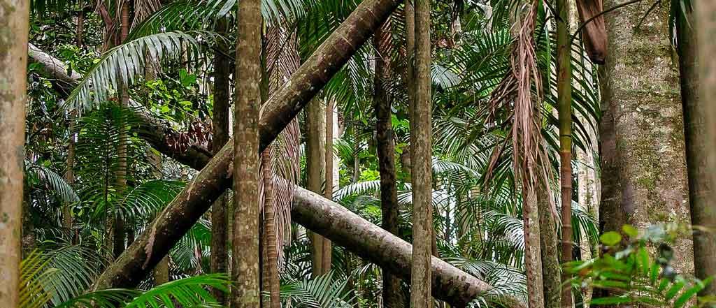 O que fazer em Queensland floresta daintree