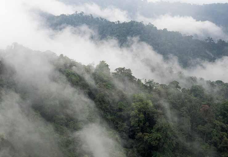 Floresta Nublada, Equador