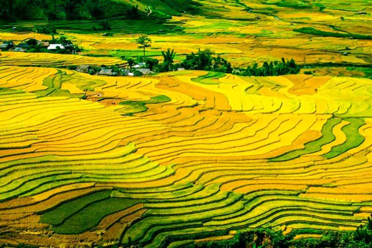 Campos de arroz de Sapa, Vietnã