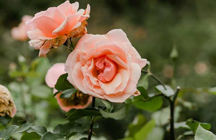 Jardim das Rosas de Portland
