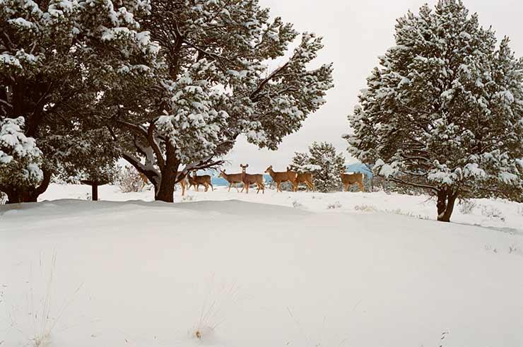 Quando começa a nevar em Aspen?