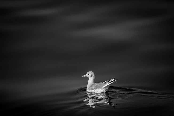 Duck Island,